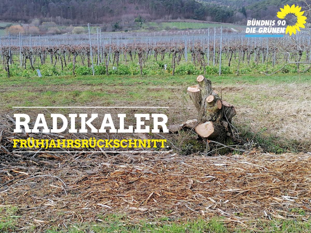 Radikaler Frühjahrsrückschnitt an Bäumen und Sträuchern in der Gemarkung Edenkoben